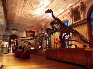Природно-исторический музей в Вене