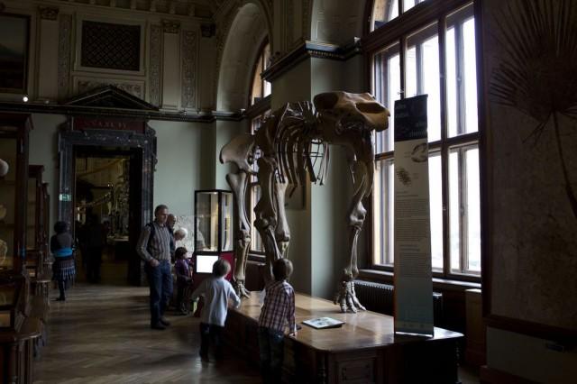 Музей естествознания (Naturhistorisches Museum)