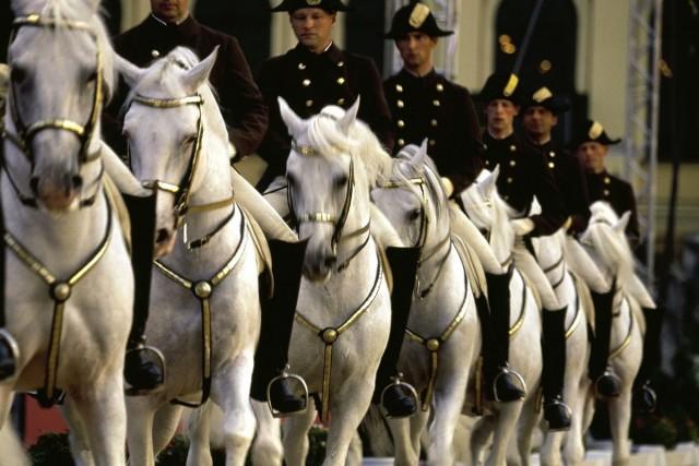 Музей лошадей липиццианской породы (Lipizzaner Museum)