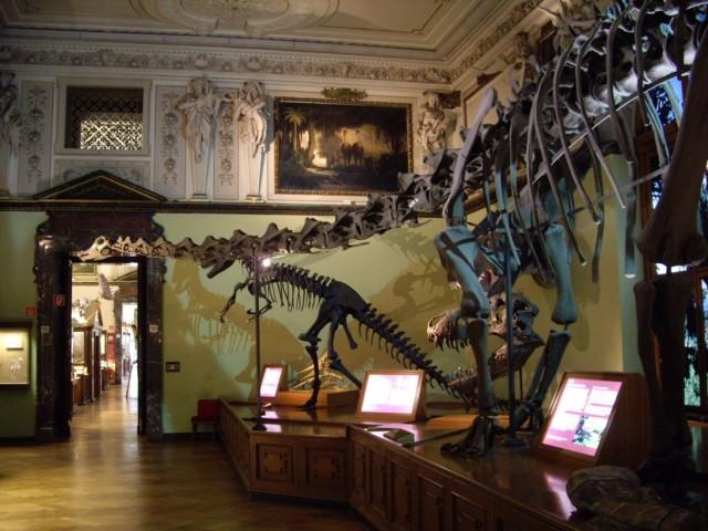 Музей естественной истории (Naturhistorisches Museum)