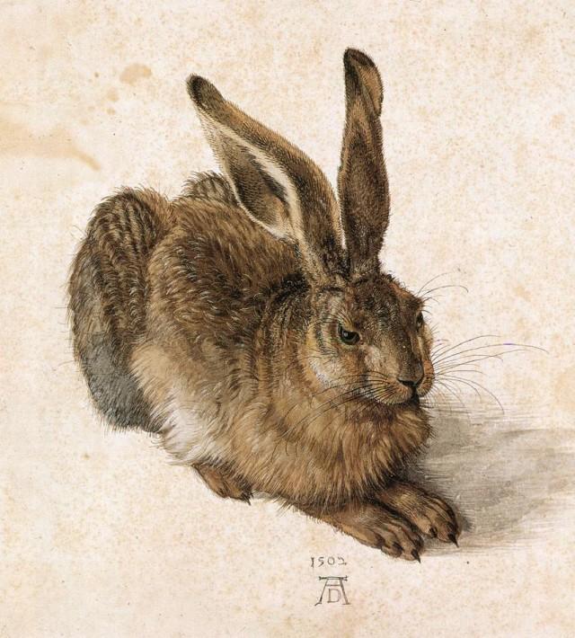 Альбрхт Дюрер. Молодой заяц (1502) Альбертина в Вене