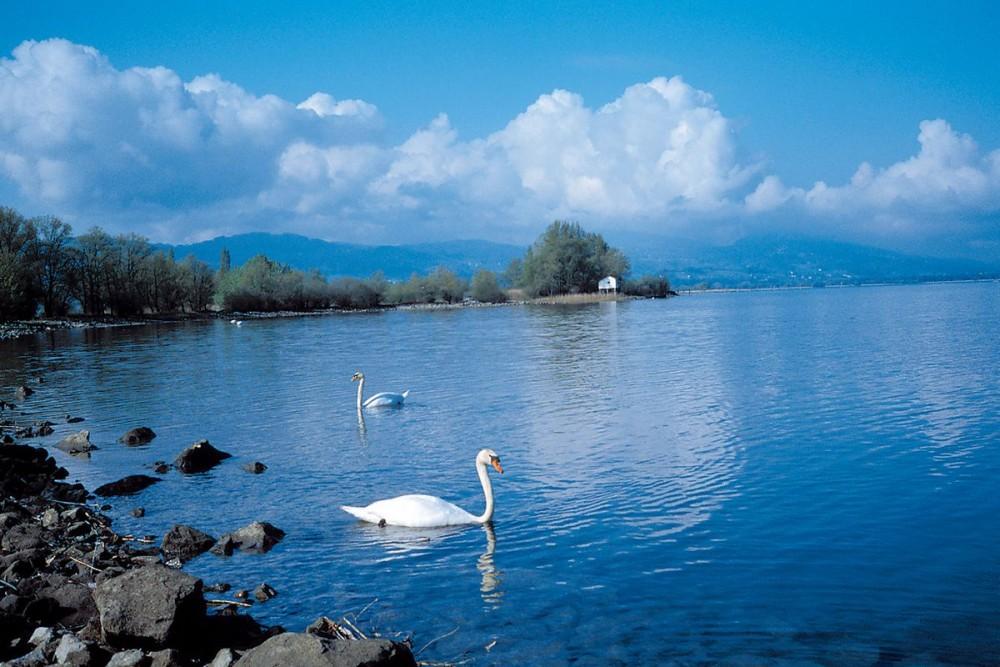 Боденское озеро (Bodensee)