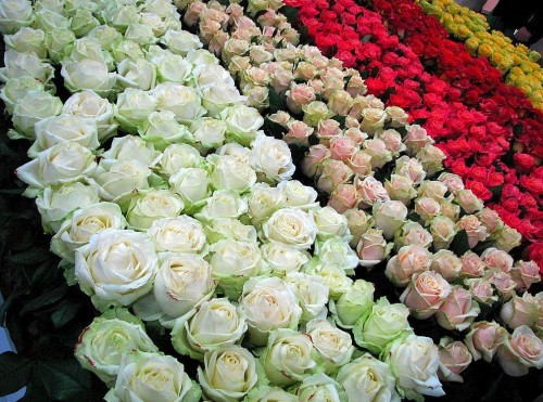 Бал цветов в Вене