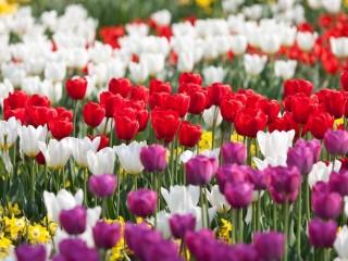2012 год – юбилейный для Венских садов