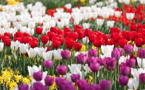 150 лет в 2012 году исполняется городским садам Вены