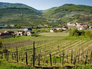 На здоровье! Культура вина в Нижней Австрии