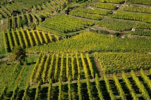 Винодельческая область Нижней Австрии – Вахау