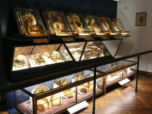 Музей патологоанатомии (Pathologisch-anatomisches Bundesmuseum)