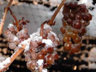 Белое десертное вино Eiswein