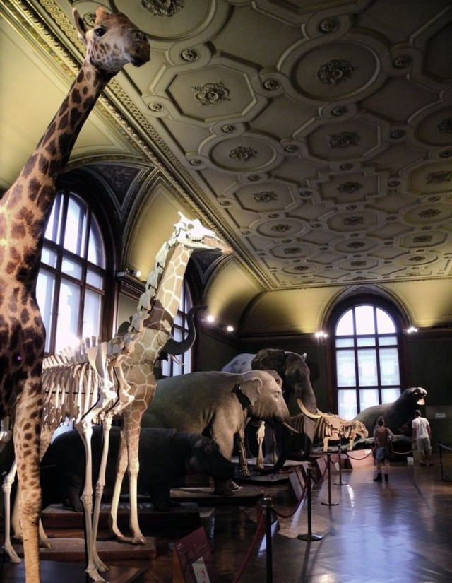 Естественно-исторический музей (Naturhistorisches Museum)