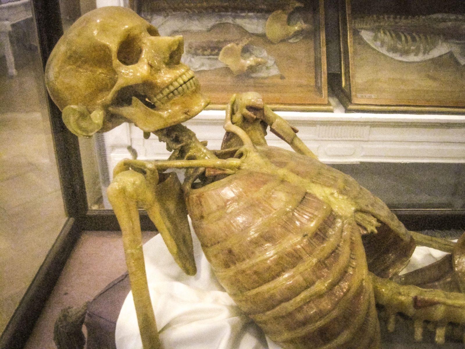 Восковой скелет