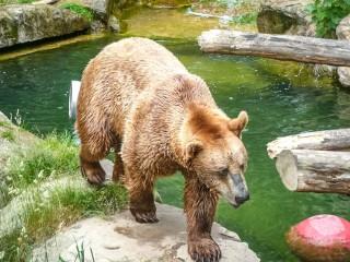 Alpenzoo — высокогорный альпийский зоопарк