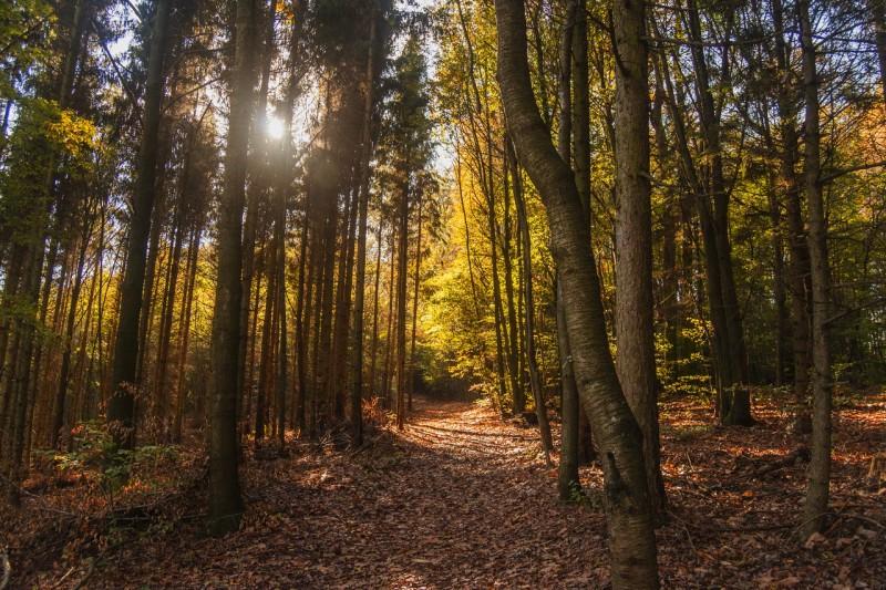 Венский лес (Wienerwald)