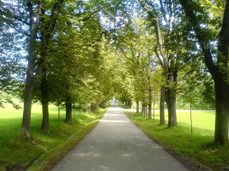 Лайнцер Тиргартен (Lainzer Tiergarten)