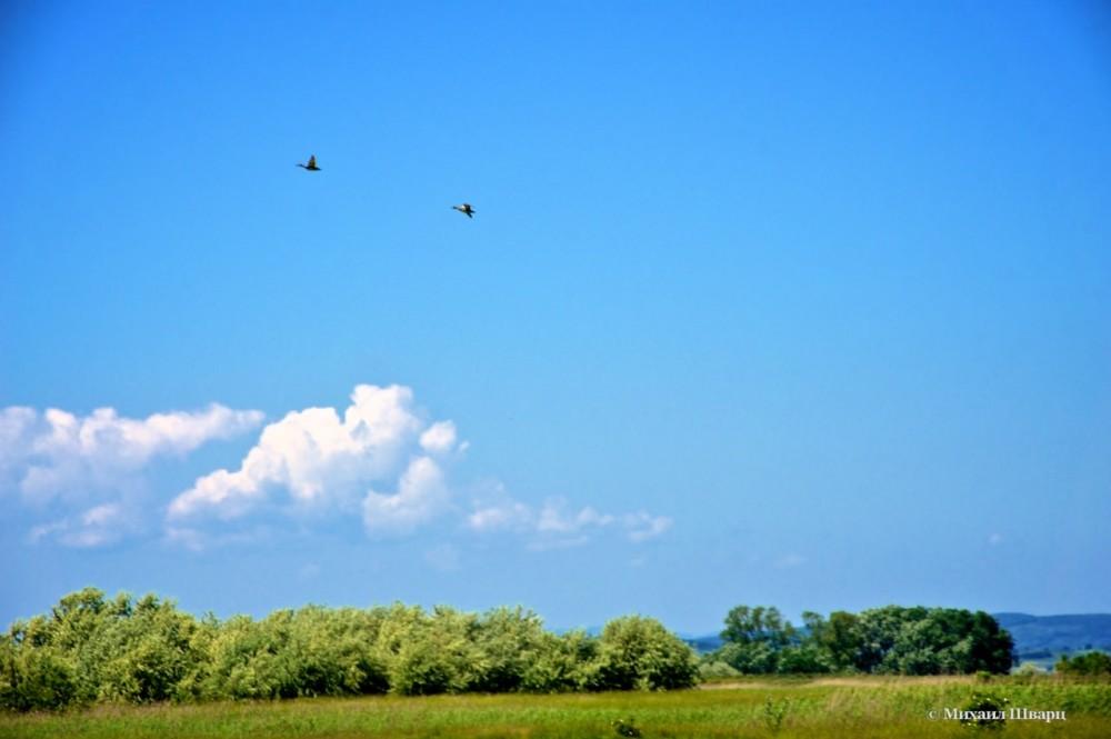 Утки полетели