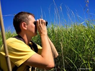 Как мы смотрели птиц на озере Нойзидлерзее