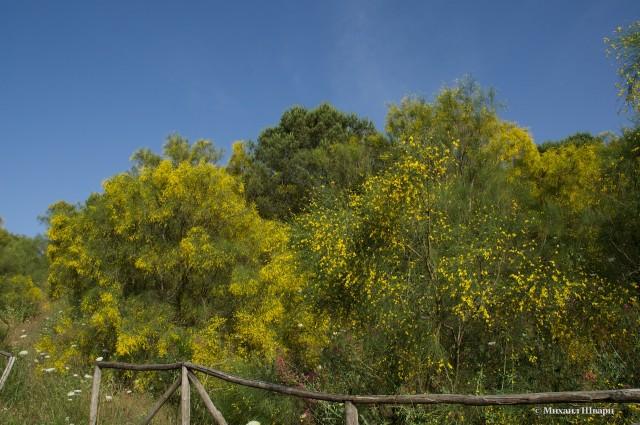Пахучие деревья