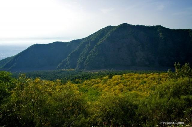 Желтое море из цветущих деревьев
