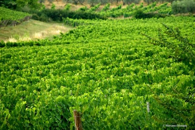 Край виноградников
