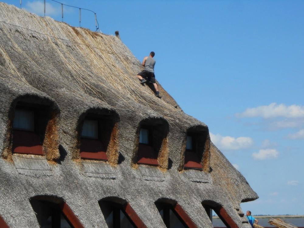 Дом с трастниковой крышей