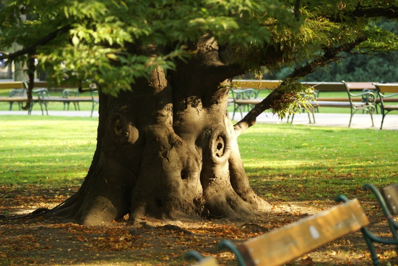 Древнее дерево