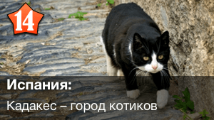 Кадакес город котиков