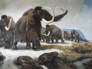 Мамонты в венском Музее естествознания