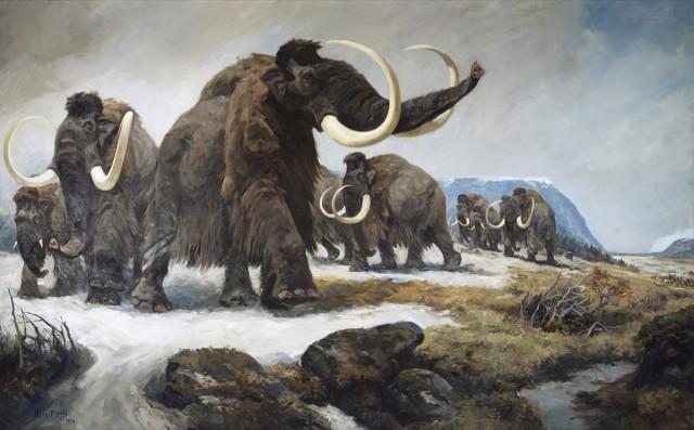 Стадо  шерстистых мамонтов