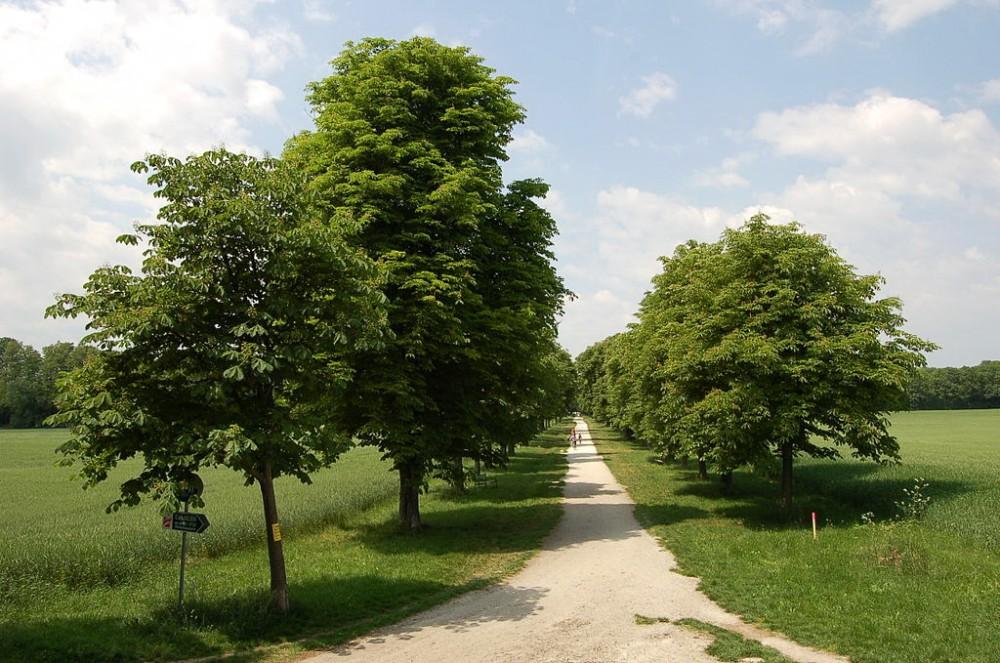 Парк Академии (Akademiepark)