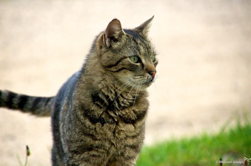 Как же без котиков