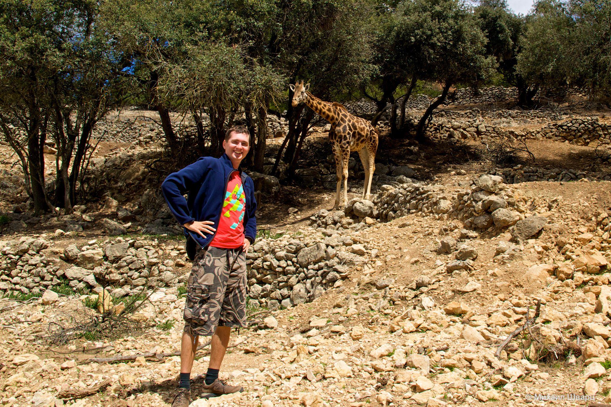 Как мы ездили на сафари со львами в Испании
