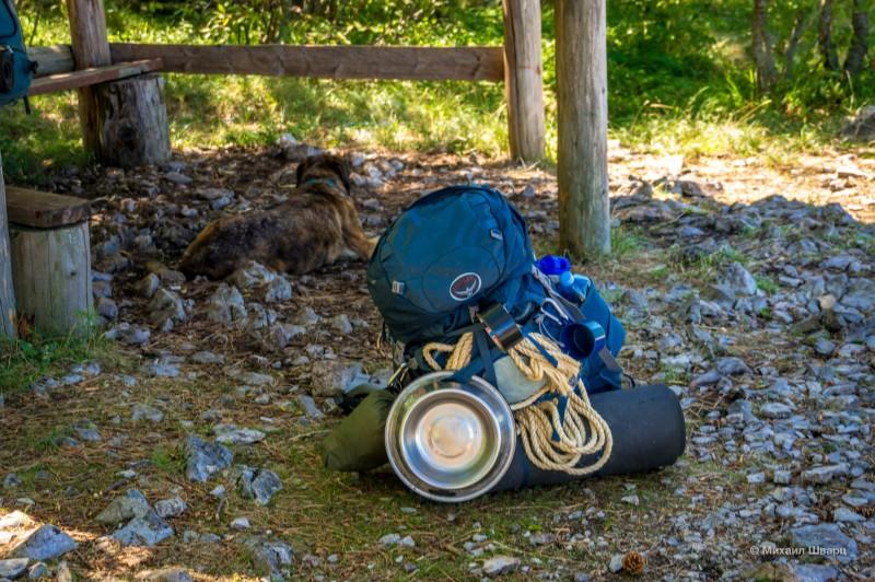 Рюкзак с поилкой для собак