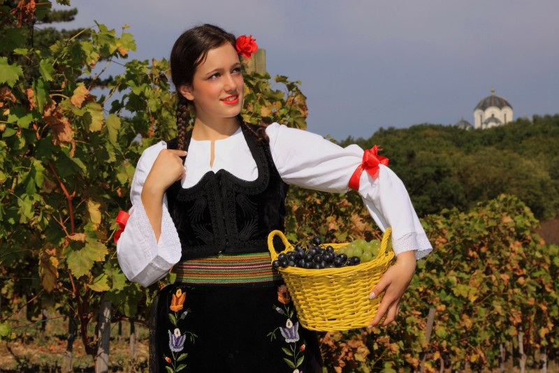 Фестиваль сбора винограда
