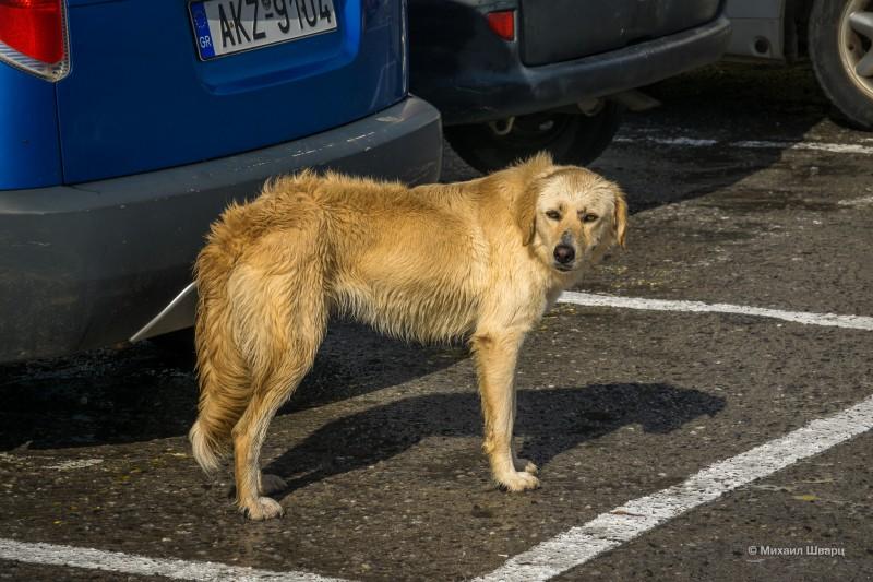 Сутулая собака