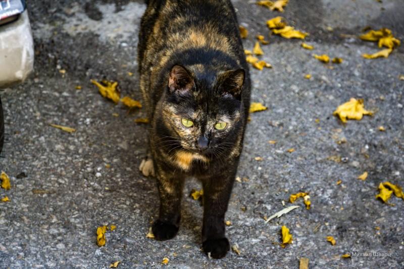 Кошка номер 2