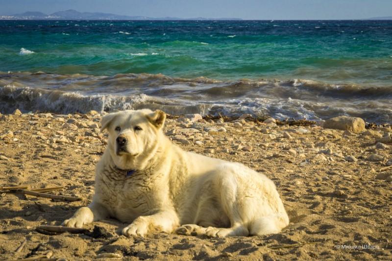 Побитый морской волк