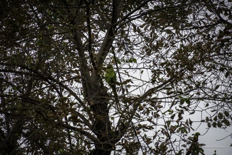 На ветках сидит попугай