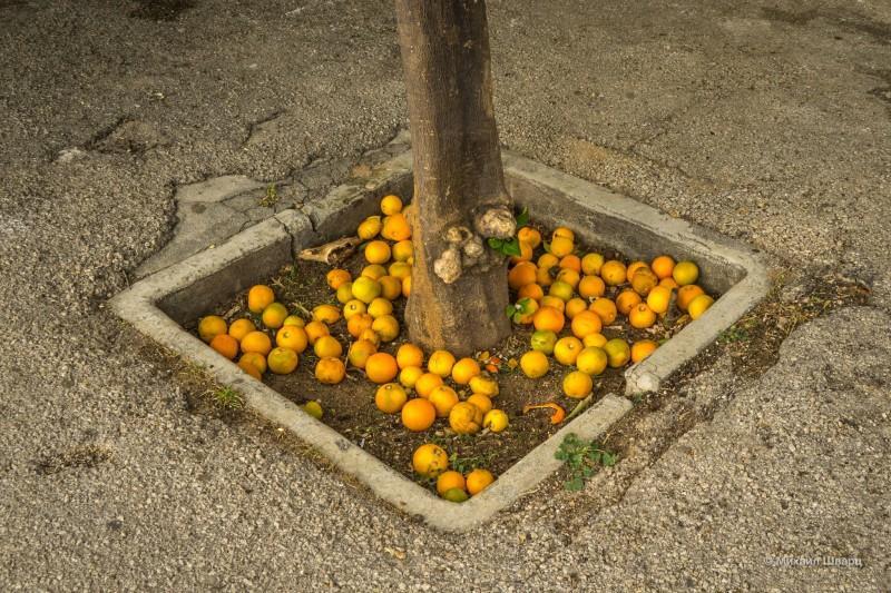 Апельсины пропадают!