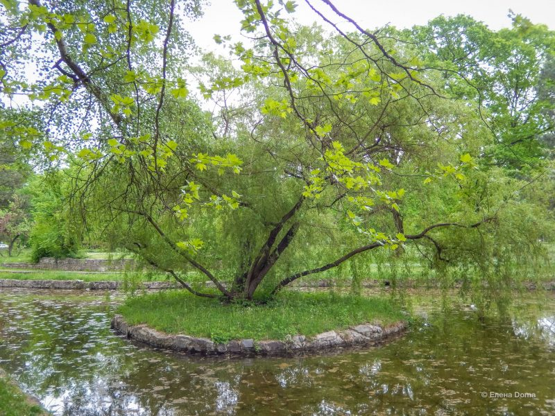Топчидерский парк