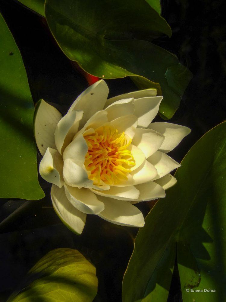 Белый и желтый цвет