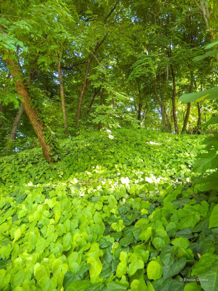 Джунгли Ботанического сада