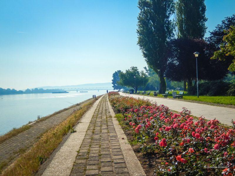 Утро на Дунае (вдали Панчевский мост)