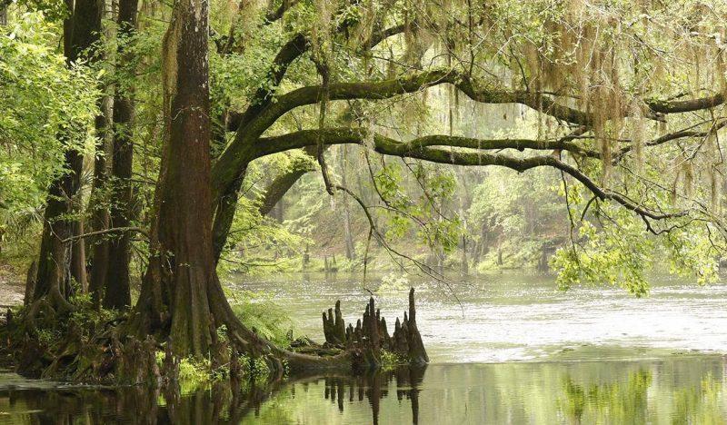 Прибрежные мангровые заросли