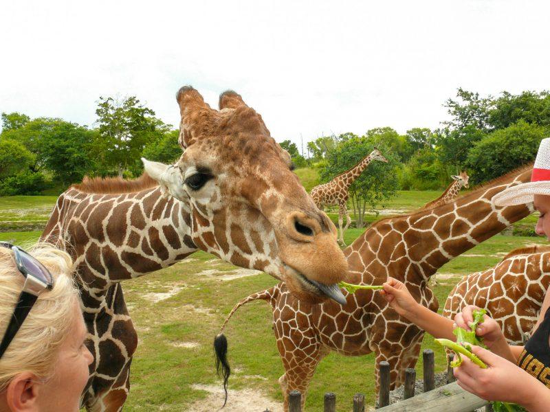 Зоопарк (Zoo Miami)