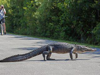 Национальный парк Everglades