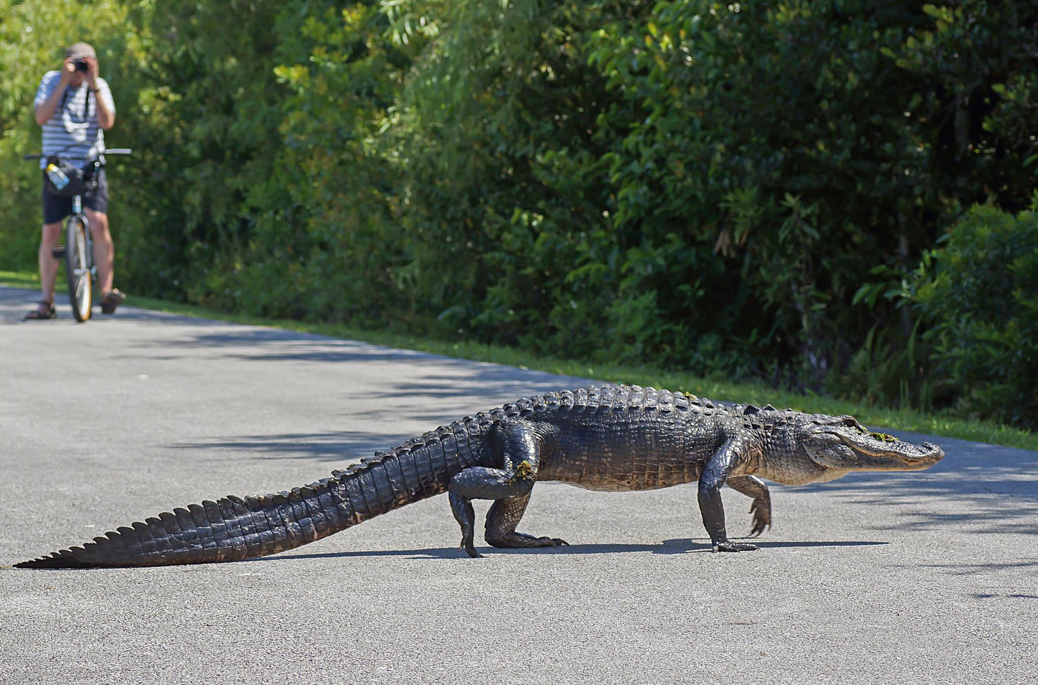 Флорида сша фото
