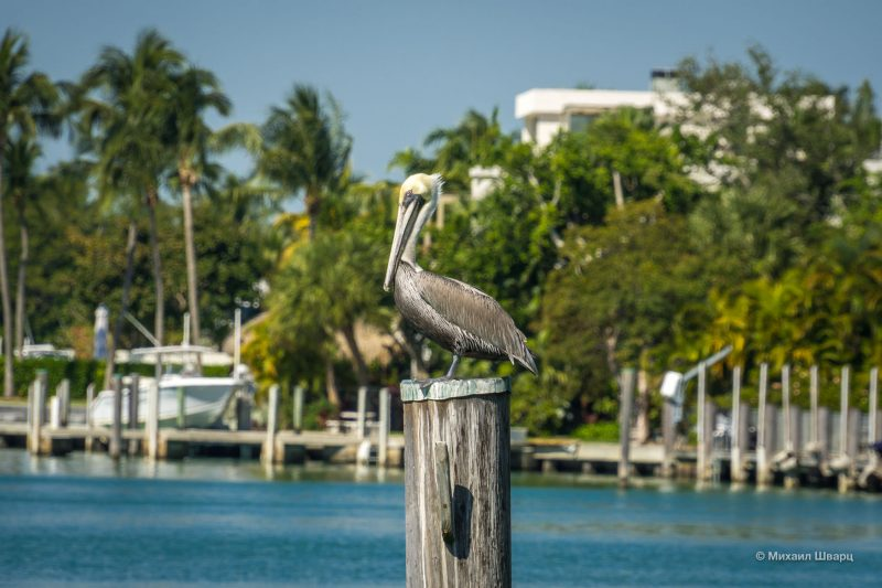 Пляжи Майами-Бич, Маленькая Гавана и остров Ки Бискейн 43