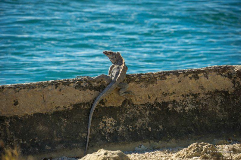 Пляжи Майами-Бич, Маленькая Гавана и остров Ки Бискейн 53