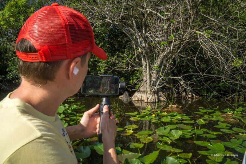 Смотрим аллигаторов в парке Everglades 3
