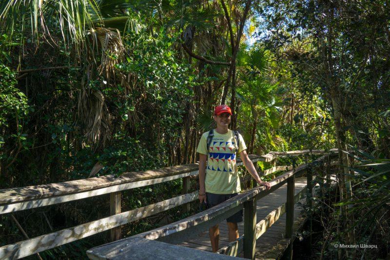 Смотрим аллигаторов в парке Everglades 8